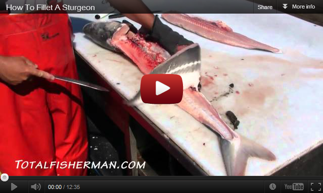 how to clean and fillet pike