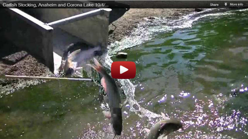 Catfish stocking anaheim and corona lake 10 4 12 for Corona lake fishing
