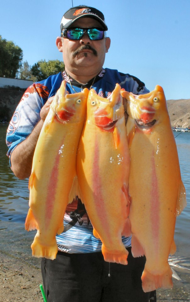 Current fish report 10 30 12 for Fish at 30 lake
