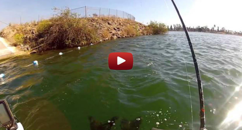 Anaheim lake mid day madness for Corona lake fishing