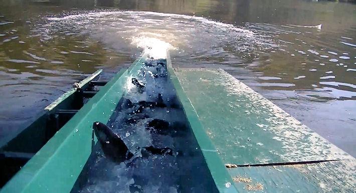 May 2013 page 3 for Santa ana river lakes fishing tips
