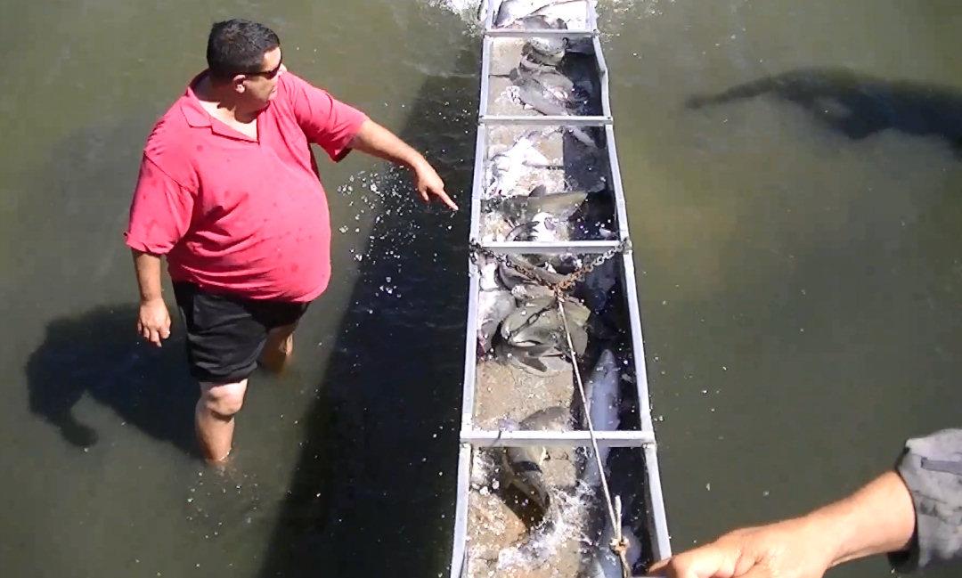 9 19 13 stocking big 2 to 10 pound catfish at santa ana for Santa ana river lakes fishing tips