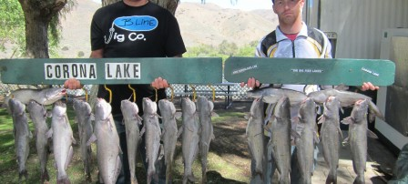 Jeff Chodowski of Chino & Adrian Contreras Jurupa Valley caught 20 catfish totaling 59 pounds their largest cat at 6 pounds 8 ounces using shrimp from a boat - Corona Lake