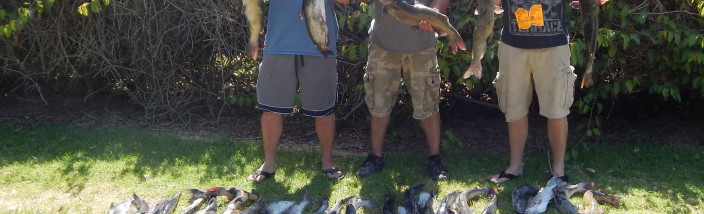 3 anglers with 75 catfish totaling 225 at SARL
