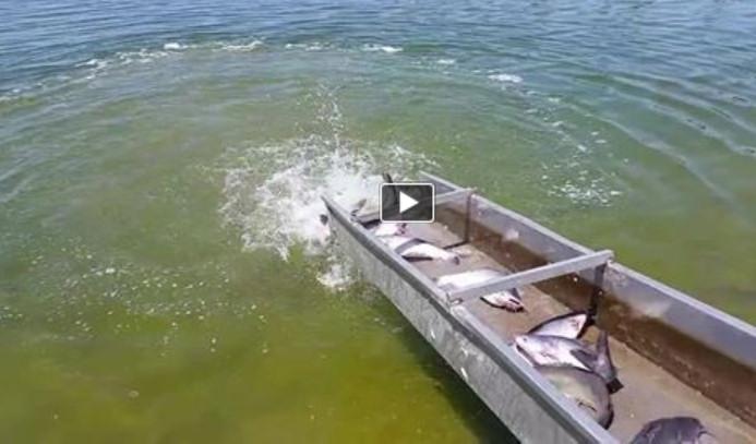 8 1 14 7 30 14 7 25 14 big channel blue catfish for Santa ana river lakes fishing