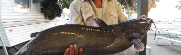 Erasmo Salas of Compton caught and released a 18 pound catfish using mackerel it the Catfish Lake.