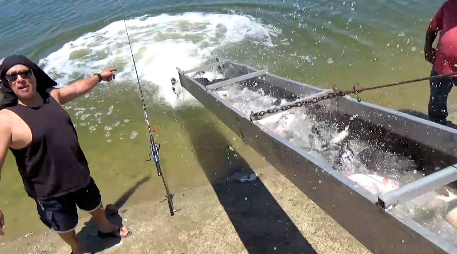 6 19 15 stocking blue silver channel catfish tasty for Santa ana river lakes fishing tips