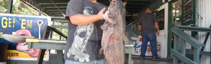 Arik Morillo of Los Angeles caught a 50 pound catfish using a hot dog fishing from shore in the Catfish Lake